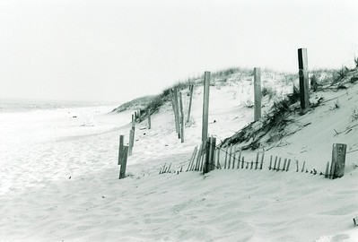 Jersey Dunes