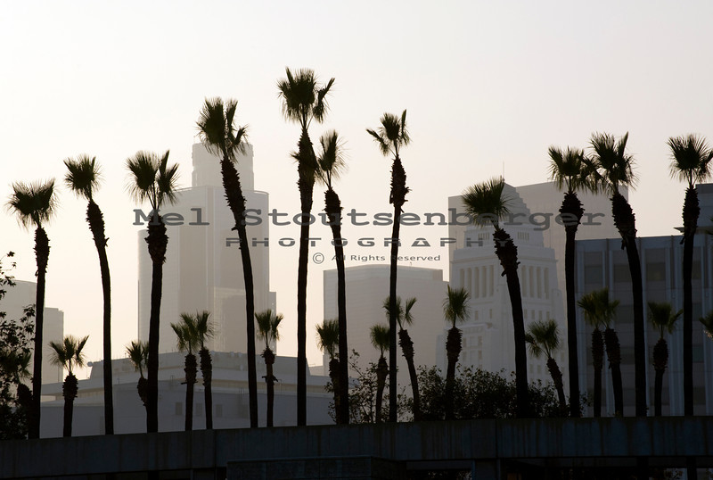 Two rows of Washingtonian Palm Trees shays in an afternoon breeze near the LA civic center.