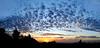 Sunrise composite shot from Bel Air California.