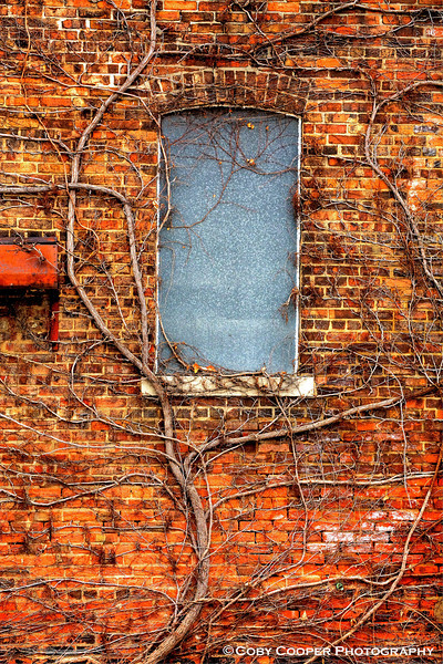February 23, It was a very gray weekend...again. Not many people out either. This window jumped out at me primarily because of the vine and the way it embraced the wall and window.
