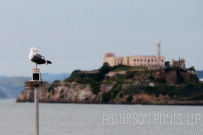 Free As a Bird - A seagull near Pier 39 in San Francisco with the ominous Alcatraz Island in the background.