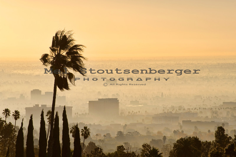 A palm tree sways over the west side of Los Angeles on a windy yet foggy morning.