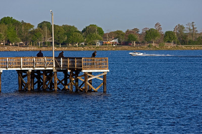 Fishing and Boating in Lake Minneola