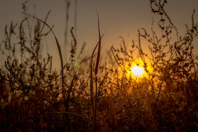 Clinton State Park sunset through prairie grass
