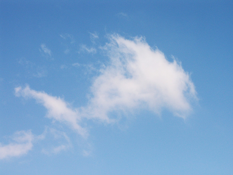 Fish Cloud