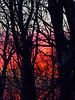 I love the woods behind our house, but the trees do pretty much block our views of sunrises, moonrises, and the river at the foot of the hill.  Still, there was plenty of color on this morning.<br /> <br /> Winter sunrise (Latitude: 42° 16' North)<br /> Ann Arbor, Michigan<br /> January 27, 2013