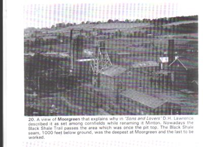moorgreen 6