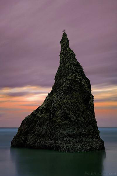 """Bandon's Monolith and Translucent Seagull"" (Oregon)"