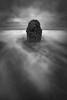 """Ghost Tree"" - Oregon"