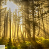 Light shining through the trees - Cape Lookout Tillamook