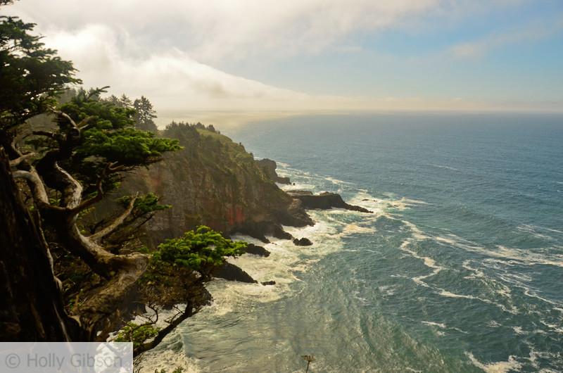 Rocky outcropping on Cape Falcon
