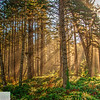 Sunlight and fog through the trees - morning at Cape Lookout
