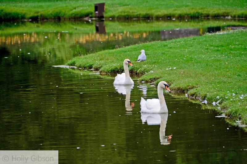Swan Pond - Mount Allison University, Sackville, New Brunswick - 60