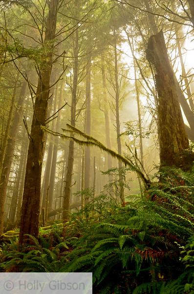 Hike from Seaside to Cannon Beach - Oregon Coast