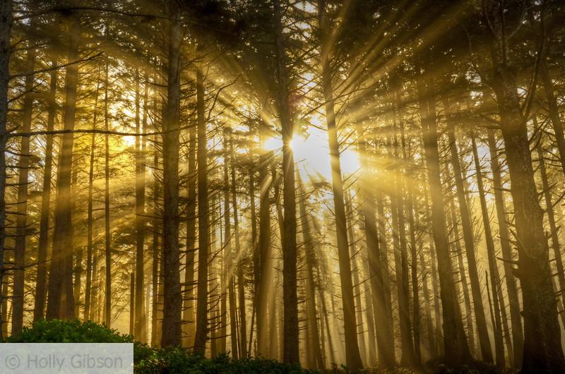 Light shining through the trees