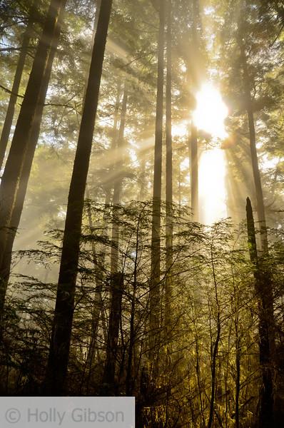 Sun in the trees - Cape Falcon trail