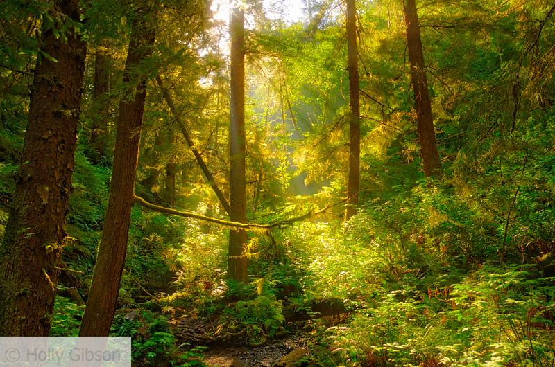Scene from bridge on north trail