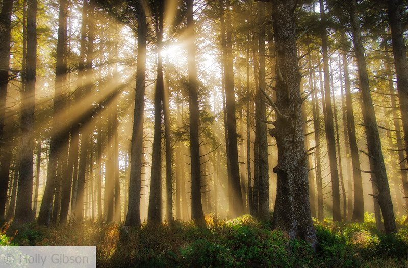 Sunlight and fog in the trees
