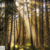 Sun and fog in the trees - morning at Cape Lookout