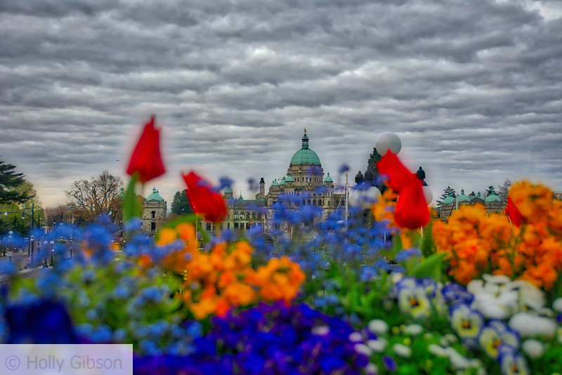 Legislature Building - Victoria BC