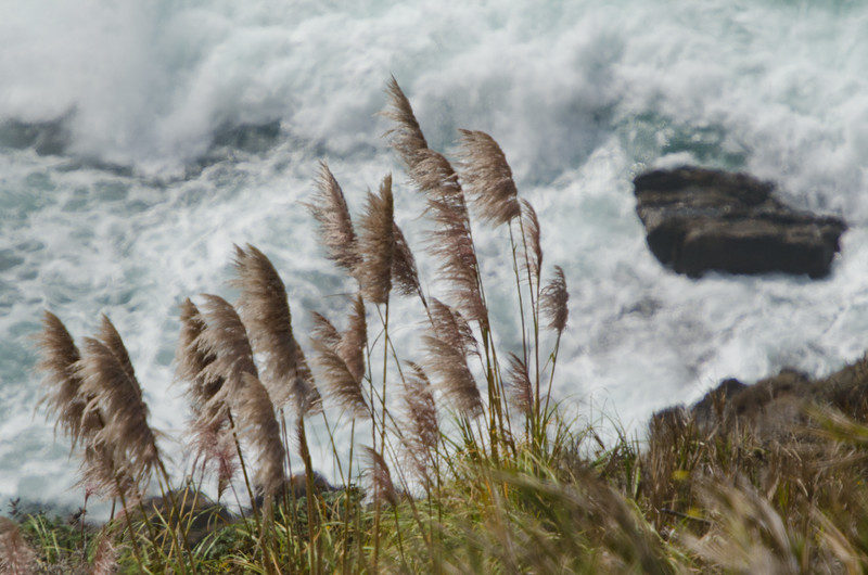 Pompous Grass and Waves