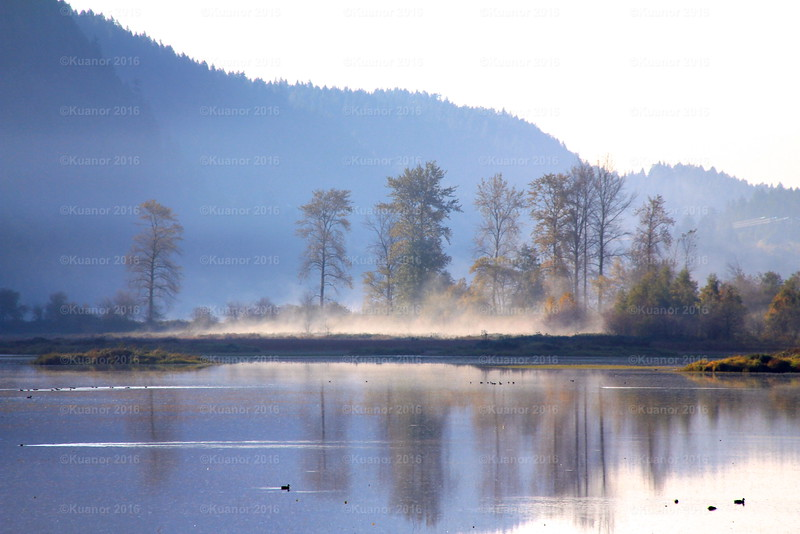 Misty Roots<br /> Deep in the vale, the steam rises from the trees of Pit Meadows tidal marsh, BC.