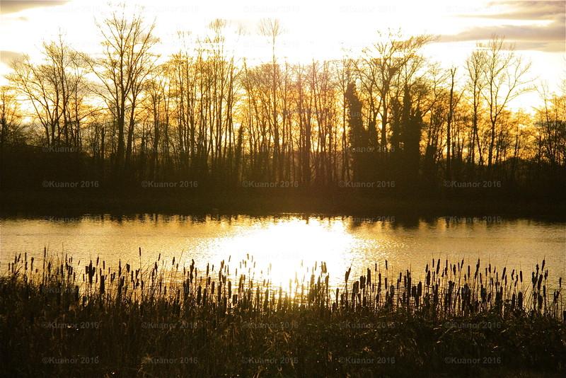 Steveston Sunset