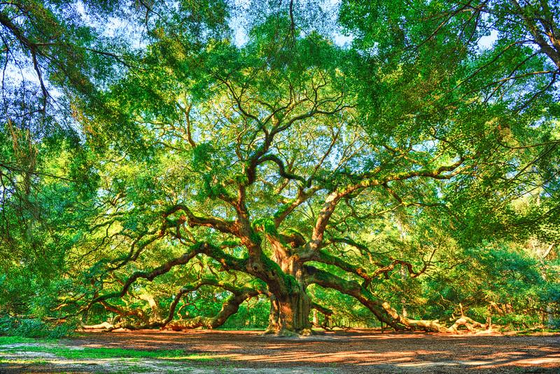 Angel Oak on John's Island in Charleston is simply beautiful