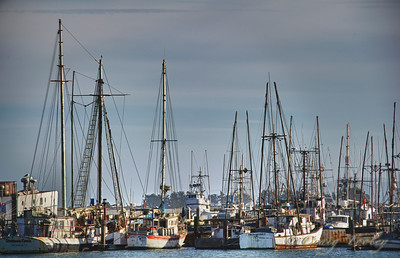 The harbor Bodega Bay California.
