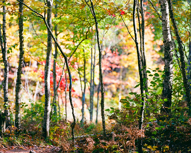 "North Country Trail near the Presque Isle River in  Porcupine Mountains Wilderness State Park  *For information on purchasing prints and canvas gallery wraps, click the ""Purchasing"" tab at the top of the page. If viewing on your mobile device, scroll to the bottom of the page and click the ""Full Site"" tab to view as if you were on your home PC and then go to the ""Purchase"" tab to for purchasing info. In mobile mode, you will not see the standard navigation bar with the ""Purchase"" tab."