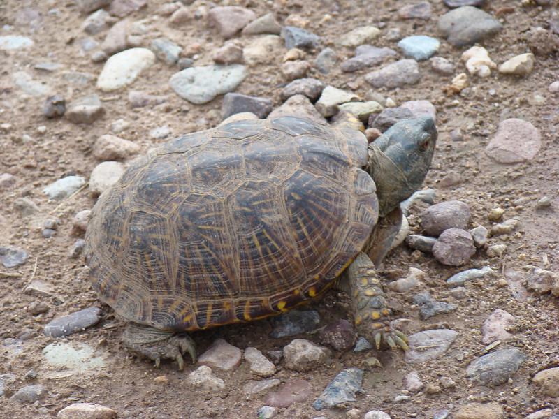 Cochise County Arizona 7/2007