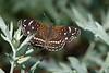 Butterfly1022