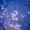 17  G Snowflakes