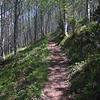16  G Trail in Trees V