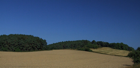 Color Land
