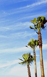 Three Hot Palms