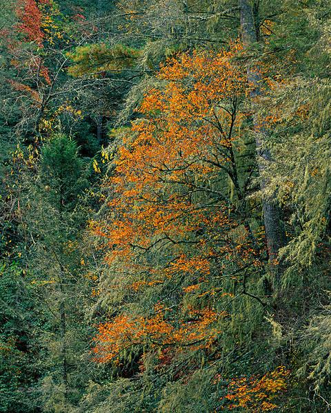 Canyon colors, fall