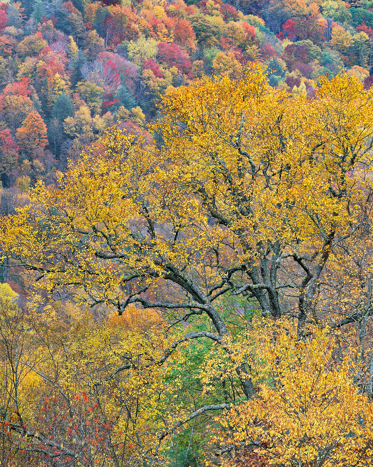 Autumn color, trees and foliage