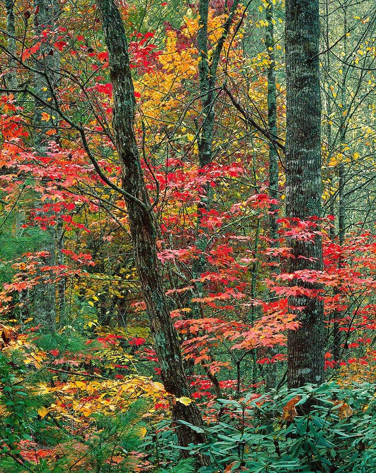 Forest color, fall