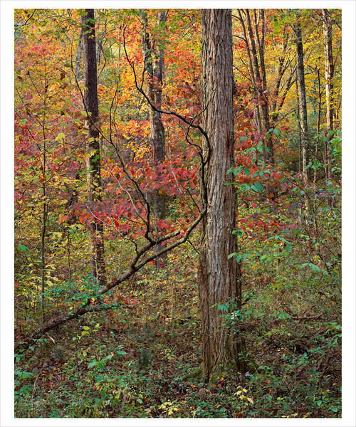 Fall foliage, tree and fallen branch