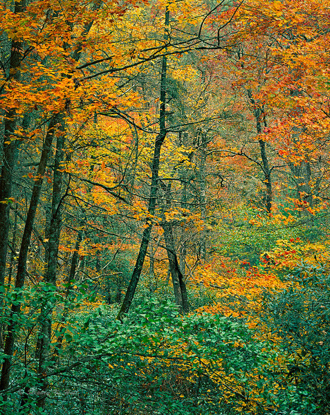 Eastern hardwoods, fall