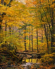 Forest and stream reflections, maples, fall