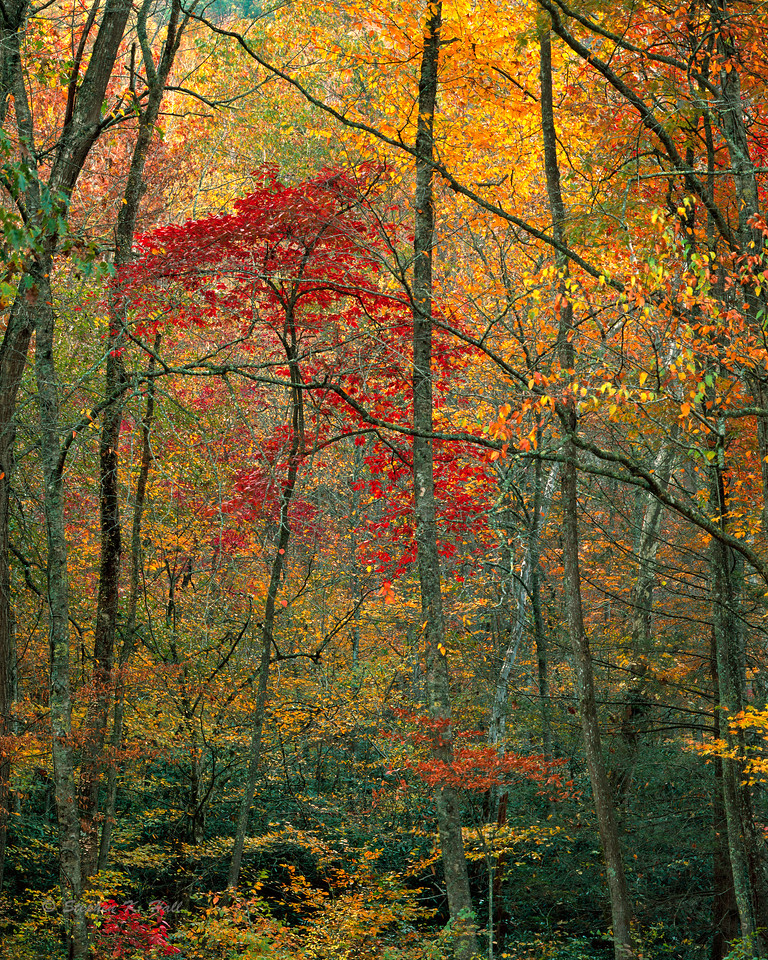 Forest tapestry, fall