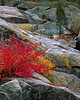Fall color along the south fork of the Tuolumne River