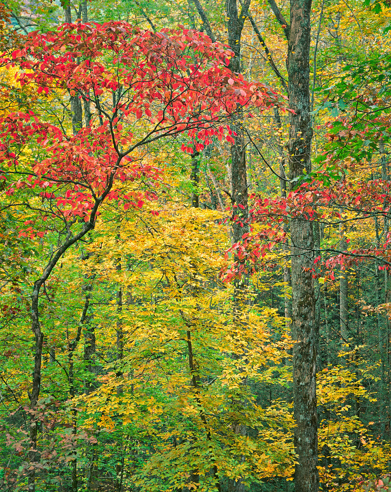 Eastern hardwood forest