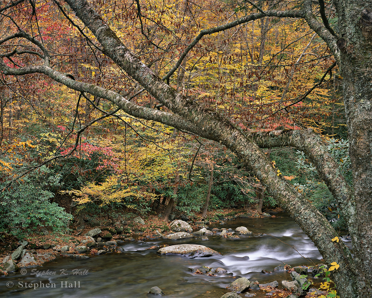 Tree and riparian foliage, fall