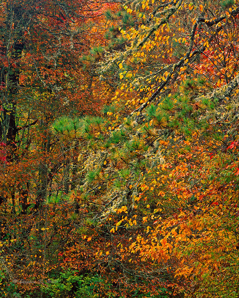Forest's edge, fall