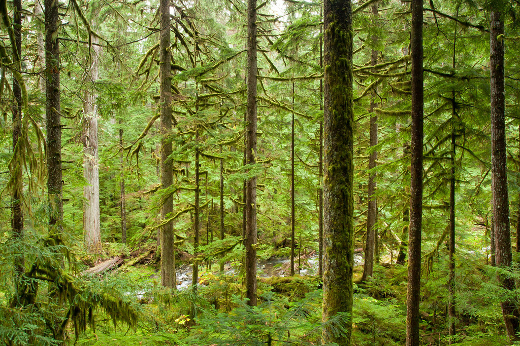 This is one of my favorite views along the trail to Lake Twenty Two on Mt. Pilchuck
