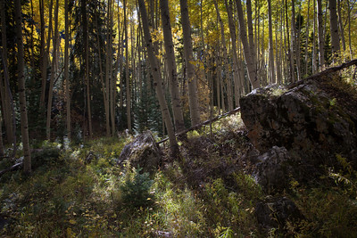 Of Boulders and Leaves