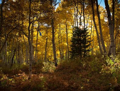 Autumn Xmas Tree